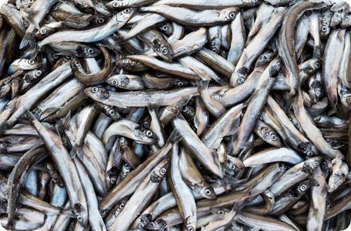 Pile-of-Fish-1280x840